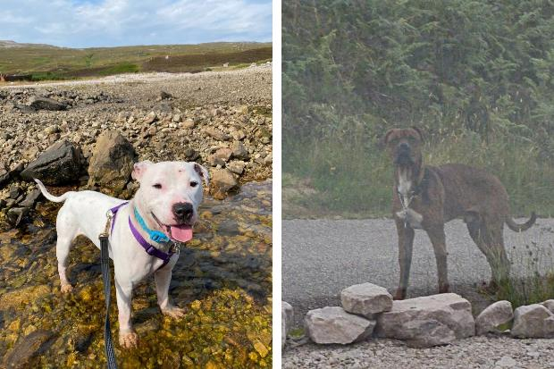 Appeal after dog with links to Renfrewshire abandoned on North Coast 500