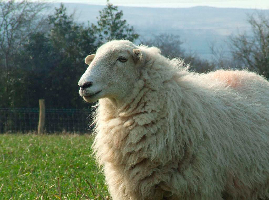Cops encourage locals to report rural crimes following theft of sheep in Lochwinnoch