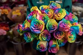 Supermarket offers rainbow rose for inclusion