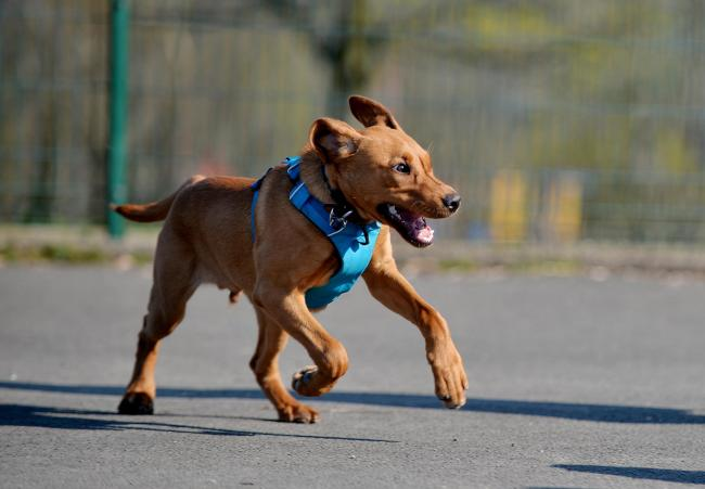 Voluntary scheme to be set up for professional dog walkers